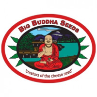 Big Buddha Seeds (1)