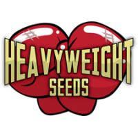 Heavyweight Seeds (3)